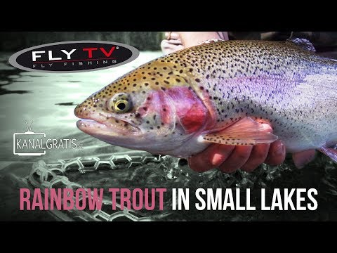 FLY TV - Rainbow Trout Fly Fishing in Small Lakes