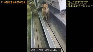 [따뜻한엄마고양이협회][121th]트럭사이에서 구조된 …