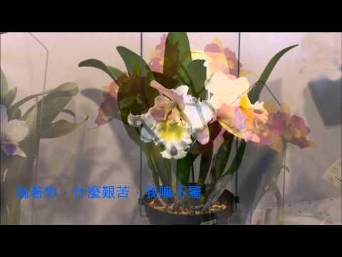 音樂磁場- 雙人枕頭, 嘉德麗雅蘭,2015蘭展,