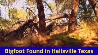 Bigfoot Footage In Hallsville Texas