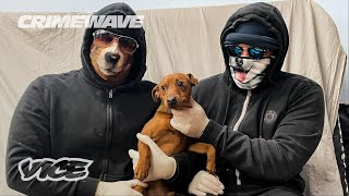 YouTube動画:The Gangs That Steal Your Puppies