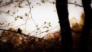 Raflum - Returning Bird & Encoffined In The Moor