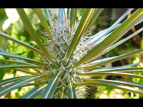 Plant Defenses: How Plants Avoid Being Eaten