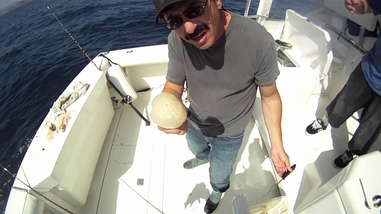 Tales of the mystery fish carpe diem dana point ca for Dana point fish report