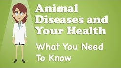 Animal Diseases and Your Health - What You Need To Know