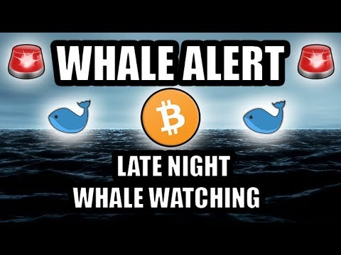 Whale Alert! 🚨 Late Night Whale Watching! 🐋 [Bitcoin/Cryptocurrency Perspective/ASMR]