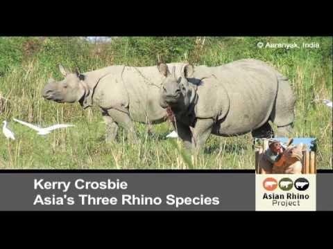 Asia's Three Rhino Species: Behind the Schemes, Episode 12