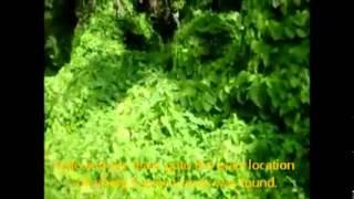 brianspredictioncom - ViYoutube