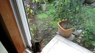 怖い猫襲来!