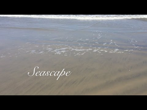 Seascape. . . celebrating our National Park's 100th Anniversary!