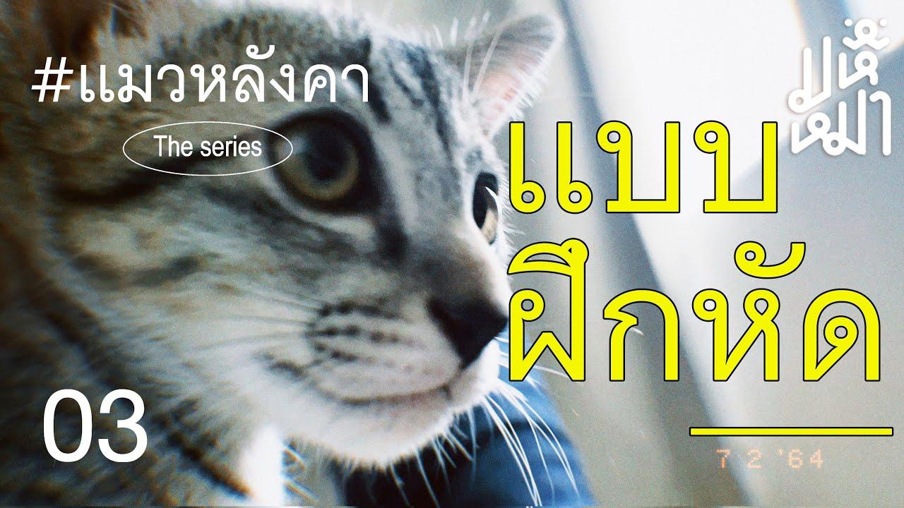 คำตัดสินใจ - แมวหลังคา ตอน 3
