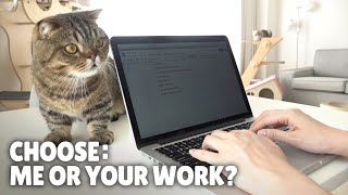 My Cats Won't Let Me Work! | Kittisaurus
