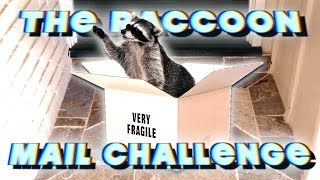 THE RACCOON MAIL CHALLENGE