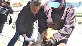 27 февраля в Ивантеевке прошла вакцинация животных