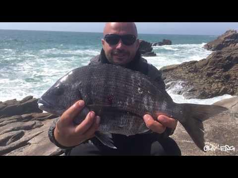 Peche du Sar en ISO fishing à Quiberon