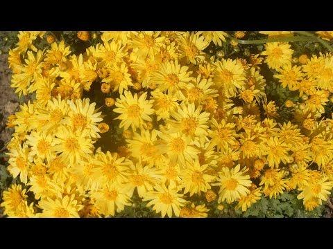 10 октября, желтые сентябринки