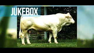 JUKEBOX - Taillé pour faire des vaches