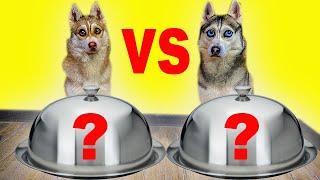 ОБЫЧНАЯ ЕДА ПРОТИВ ФИГНИ ЧЕЛЛЕНДЖ (Хаски Бандит) Говорящая собака