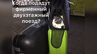 Единый билет в Крым для кота!
