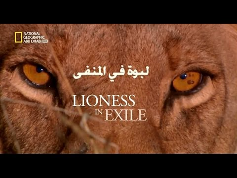 Lioness in exile - لبوة في المنفى
