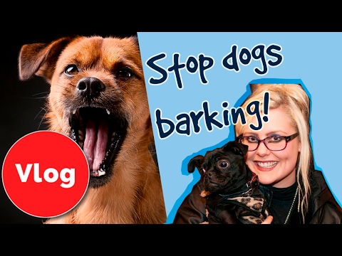 How to Stop Your Dog Barking!