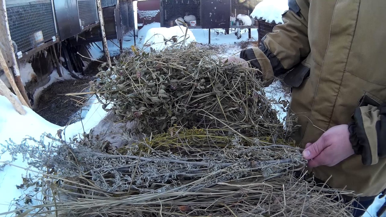 фото веток деревьев для кроликов виды этого растения