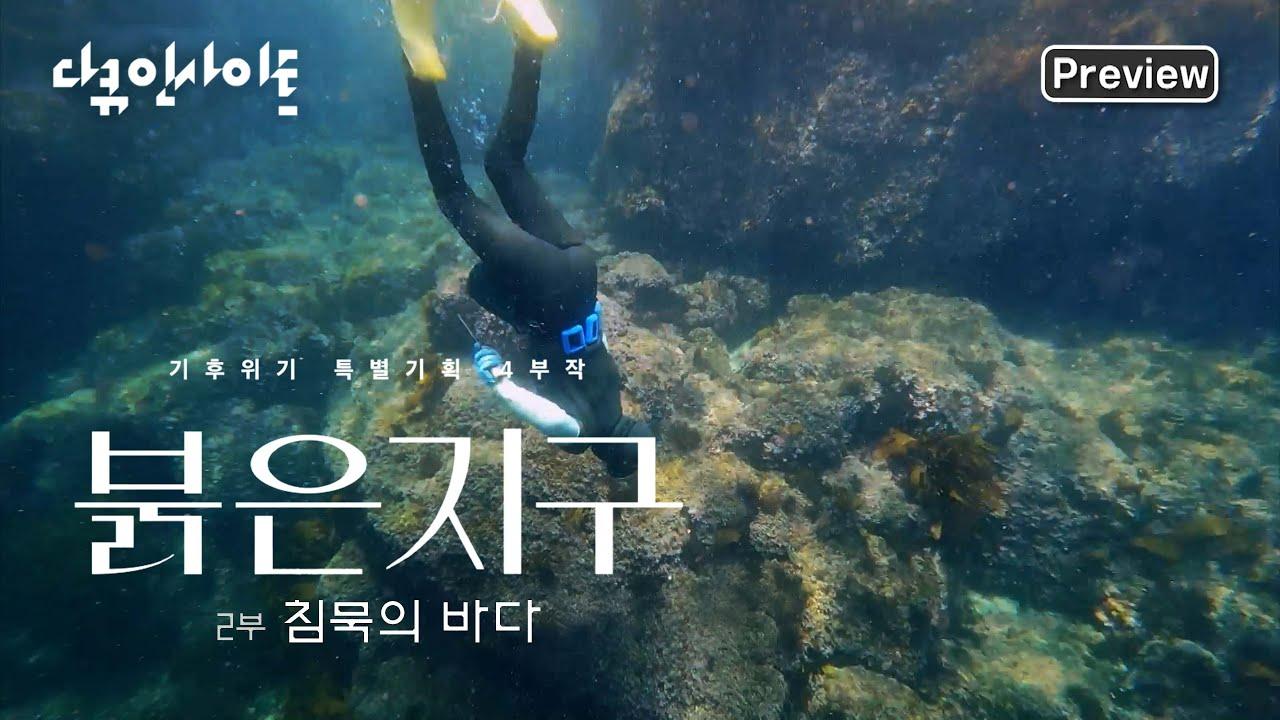 다큐인사이트 4K 선공개] 끝없는 자원의 보고 푸른 바다는 더 이상 없다! | 기후변화 특별기획 붉은지구 2부 침묵의 바다 (본방  9.9 목요일 밤 10시) - YouTube
