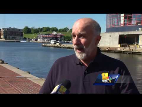 Video: Bay's overall health improves with stronger fish populations