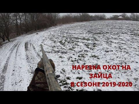 ОХОТА НА ЗАЙЦА. НАРЕЗКА ОХОТ НА ЗАЙЦА 2019-2020