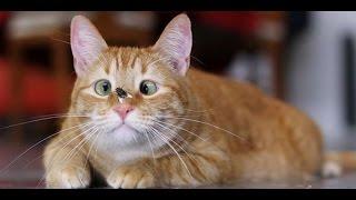 ПРИКОЛЫ с КОТАМИ #  Пушистые кошки играют.