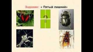 Многообразие животных и их значание. Взаимоотношения между животными.AVI