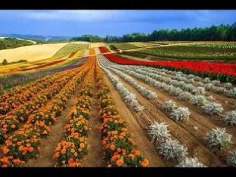 Выращивание ГЛОКСИНИИ из семян. Весь процесс от посева до всходов .