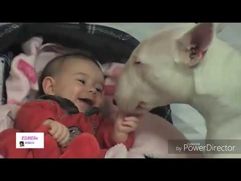 Manathe marikurumbe-pulimurukan song-remix dog and baby