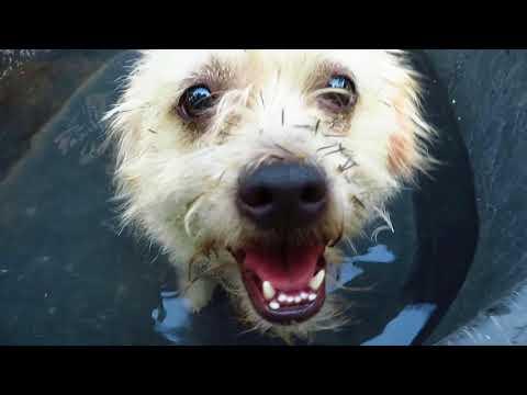 DIY Dog Pool - It is 100 Degrees!