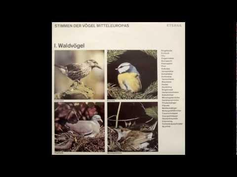 Stimmen der Vögel Mitteleuropas - I. Waldvögel