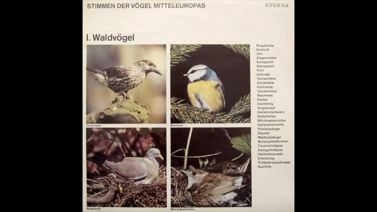 Stimmen Der Vogel Mitteleuropas I Waldvogel Youtube