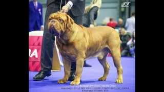 Trailer Of Bakervill's Style Kennel - Video History - Dogue De Bordeaux