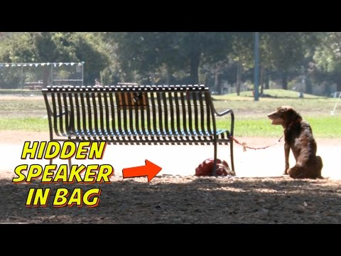 TALKING DOG PRANK!