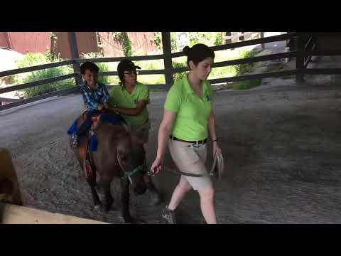Turtle back zoo (NJ) Pony ride
