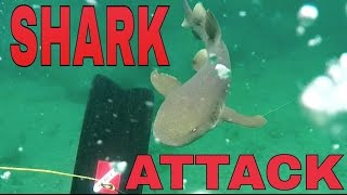 Shark Attack Unedited - Pompano Beach Florida | Road Warrior Life