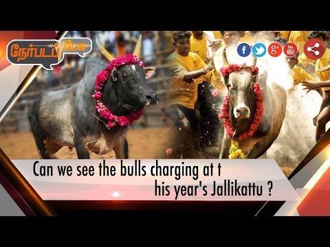 Nerpada Pesu: Can we see bulls charging this year's Jallikattu? | 09/01/17| Puthiya Thalaimurai TV