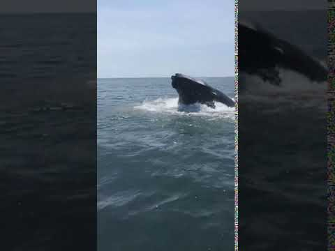 Whales were spotted off the coast of Long Island in separate incidents.
