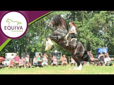 Das Shire Horse - der sanfte Riese unter den Pferden