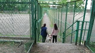 Съёмки социального ролика УКЦ «Собаки-помощники инвалидов» 1