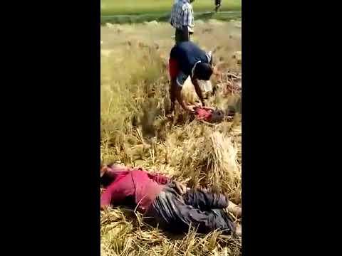 13/11/2016 update news Maungdaw NRS Burmese ma