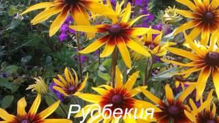 Вы все эти цветы знаете? ...Утро 14 июля...