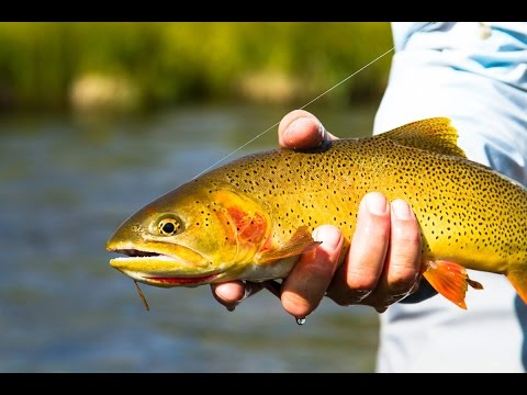 Fly Fish Jackson Hole