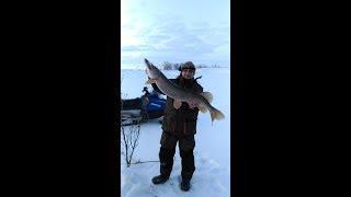 Весняна рибалка на величезних щук. Риболовля на жерлицы (уди).