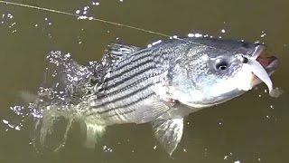"First Fishing Trip 2017 ""fluke""!"