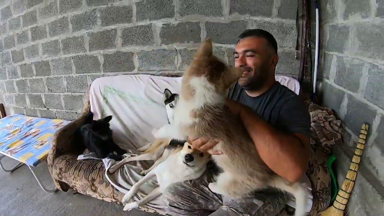 Собаки помогают устранять последствия стихии